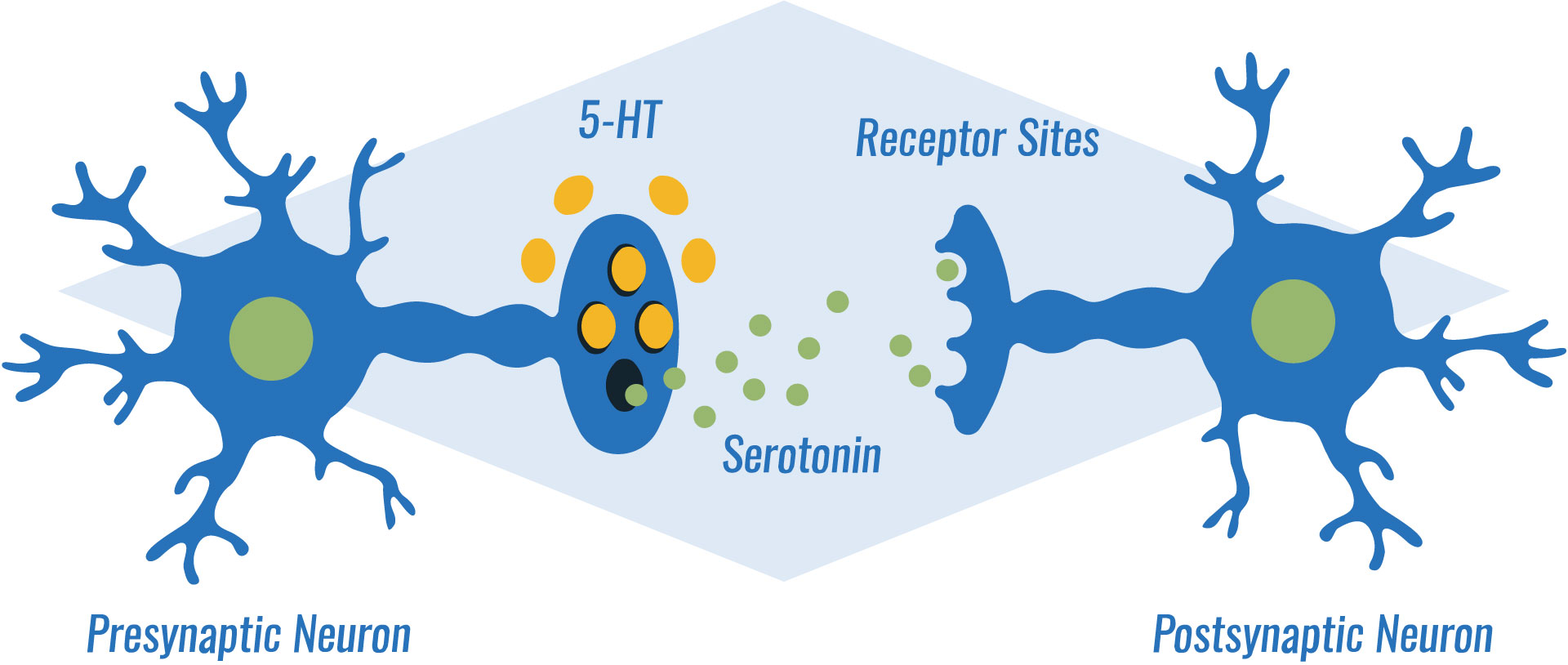 how anti-anxiety medications work: SSRIs block the reabsorption of serotonin in the brain, boosting your mood